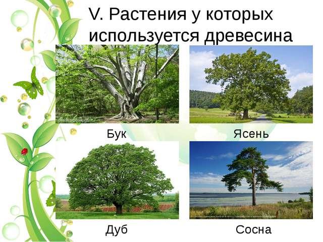 V. Растения у которых используется древесина Бук Ясень Дуб Сосна
