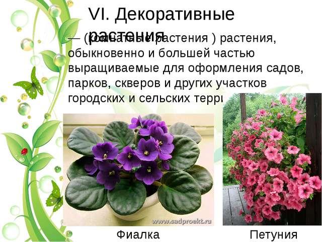 VI. Декоративные растения — (комнатные растения ) растения, обыкновенно и бол...