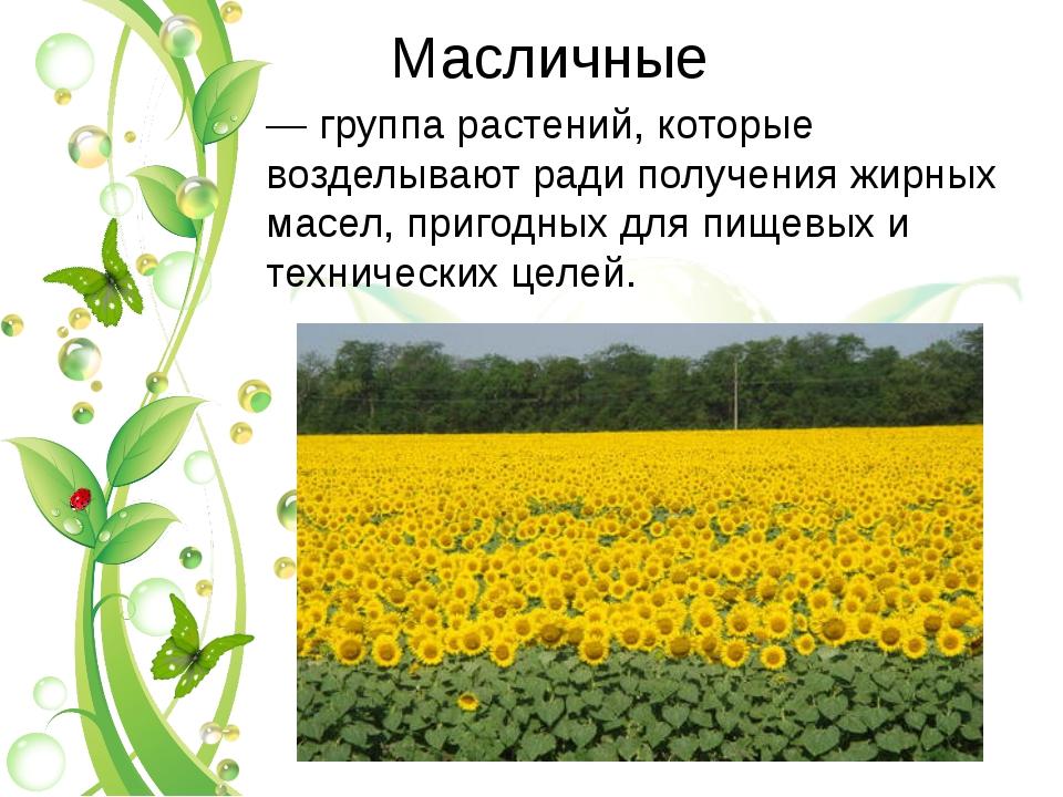 Масличные — группа растений, которые возделывают ради получения жирных масел,...