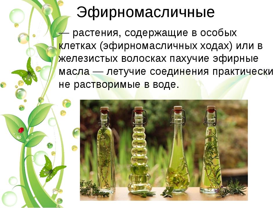 Эфирномасличные — растения, содержащие в особых клетках (эфирномасличных хода...