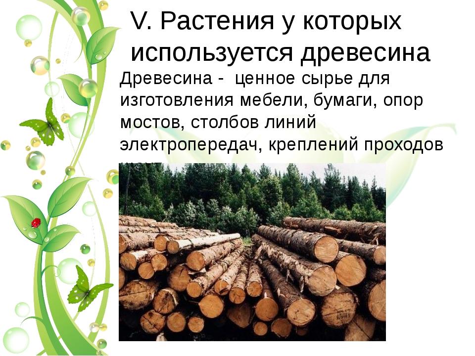 V. Растения у которых используется древесина Древесина - ценное сырье для изг...