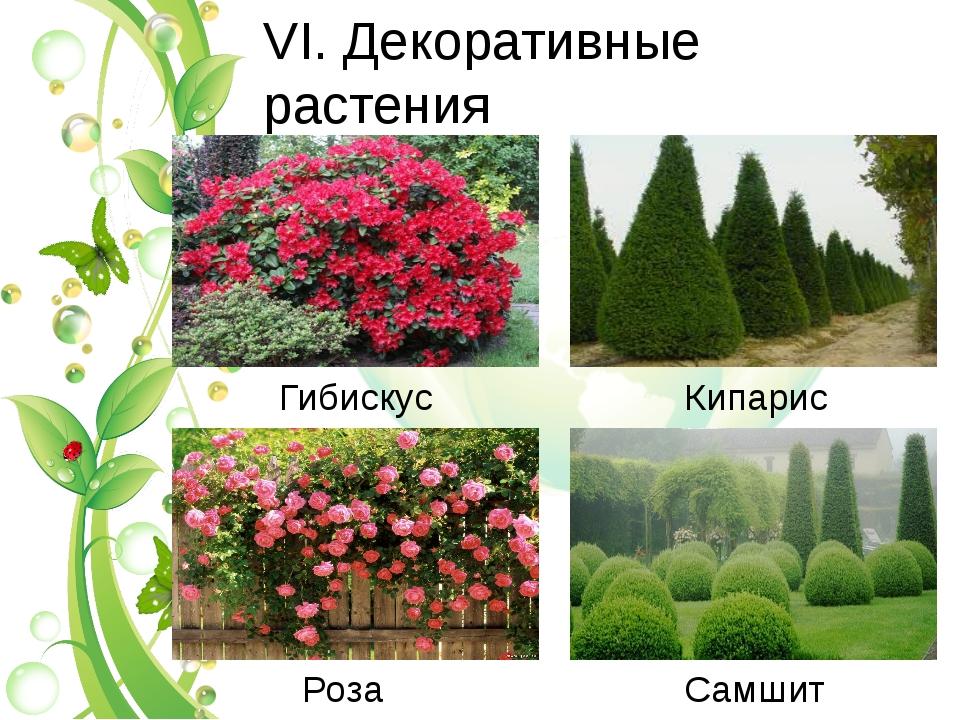 VI. Декоративные растения Гибискус Кипарис Роза Самшит