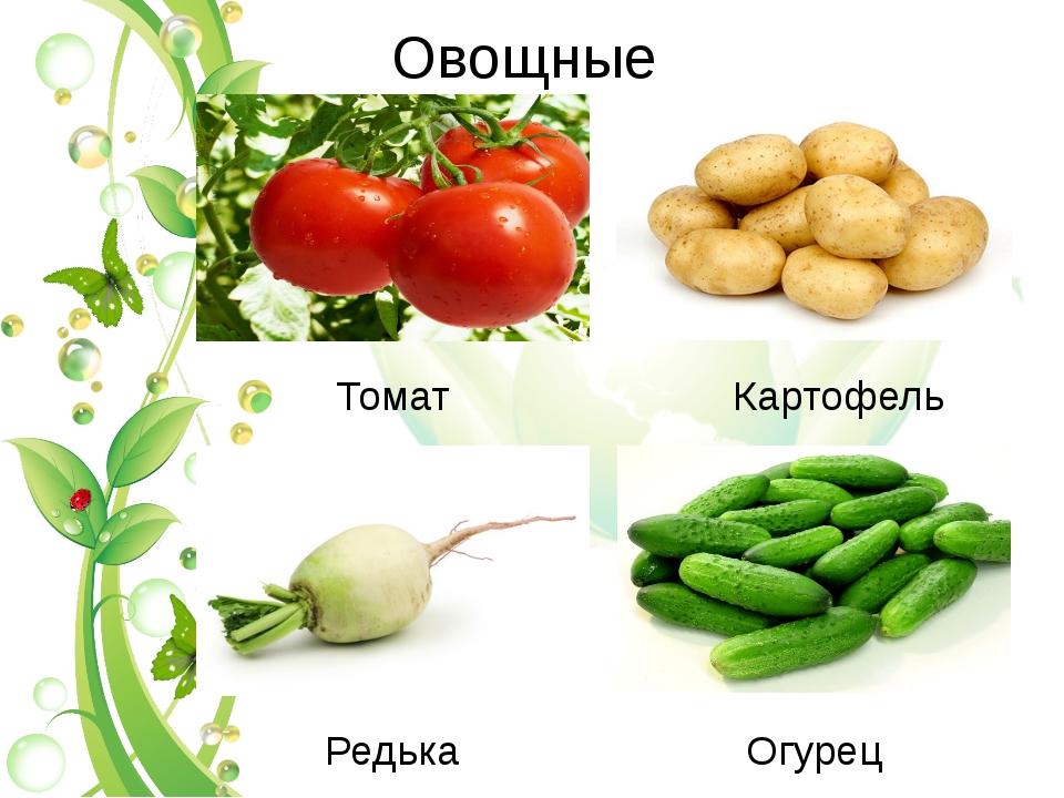 Овощные Картофель Томат Редька Огурец