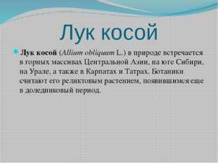 Лук косой Лук косой(Allium obliquumL.) в природе встречается в горных масси