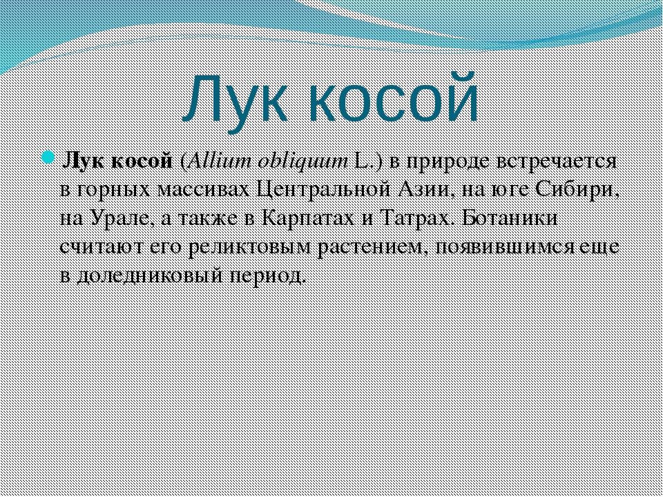 Лук косой Лук косой(Allium obliquumL.) в природе встречается в горных масси...