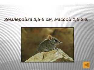 Вопрос 4 Все знают, что летучие мыши висят головой вниз. А вот в какую сторон