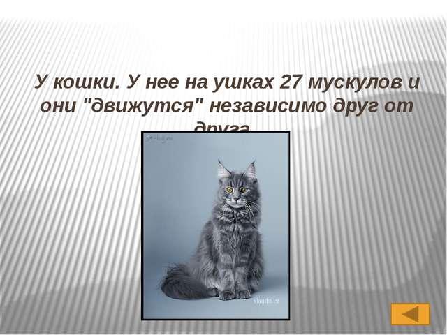 Вопрос 2 У какого известного животного ушки как локаторы настраиваются незави...