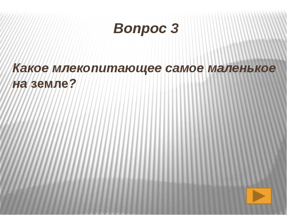 Землеройка 3,5-5 см, массой 1,5-2 г.