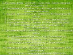 """9. Два старых дерева - дуб и клен - около музея """"Домик Каширина"""" (Нижегородск"""