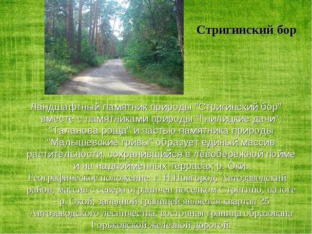 """Стригинский бор Ландшафтный памятник природы """"Стригинский бор"""" вместе с памят..."""