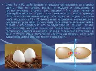 Силы F1 и F2, действующие в процессе столкновения со стороны одного яйца на д