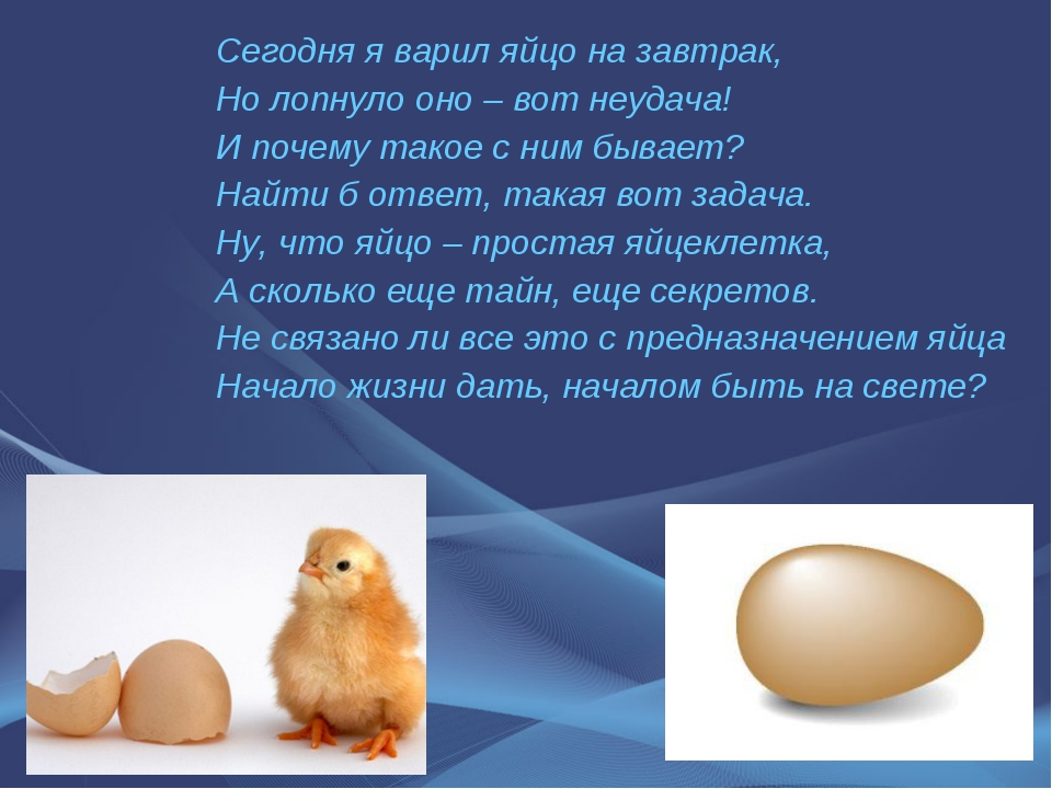 Сегодня я варил яйцо на завтрак, Но лопнуло оно – вот неудача! И почему такое...