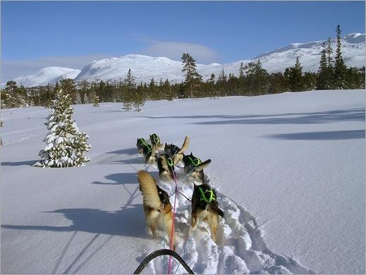 Dogsledding in Norway