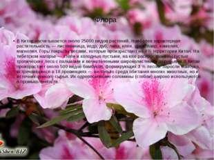 Флора В Китае насчитывается около 25000 видов растений. Наиболее характерная