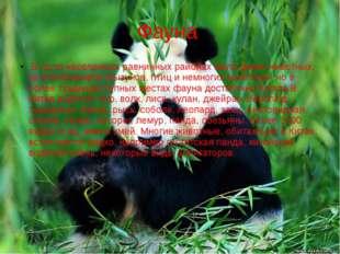 Фауна В густо населенных равнинных районах мало диких животных, за исключение