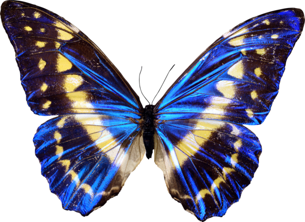 C:\Users\Карина\Downloads\butterfly_221.png