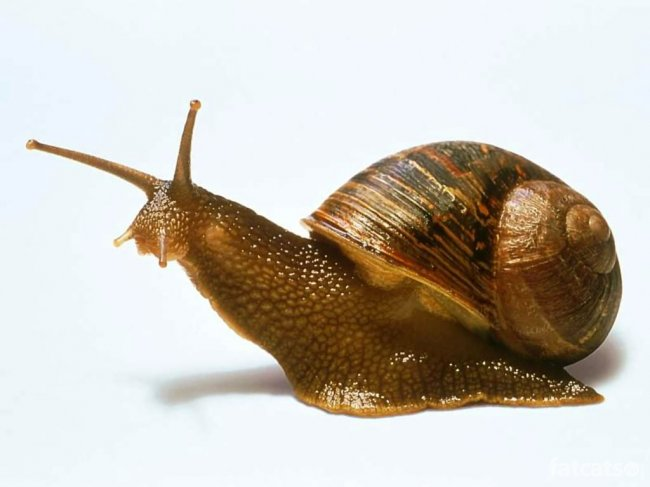 C:\Users\Карина\Downloads\1326787513_snail.jpg