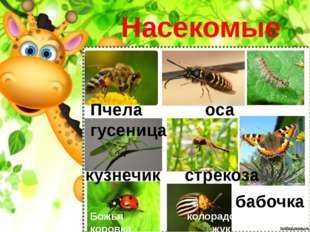Насекомые Пчела оса гусеница кузнечик стрекоза Божья колорадский коровка жук