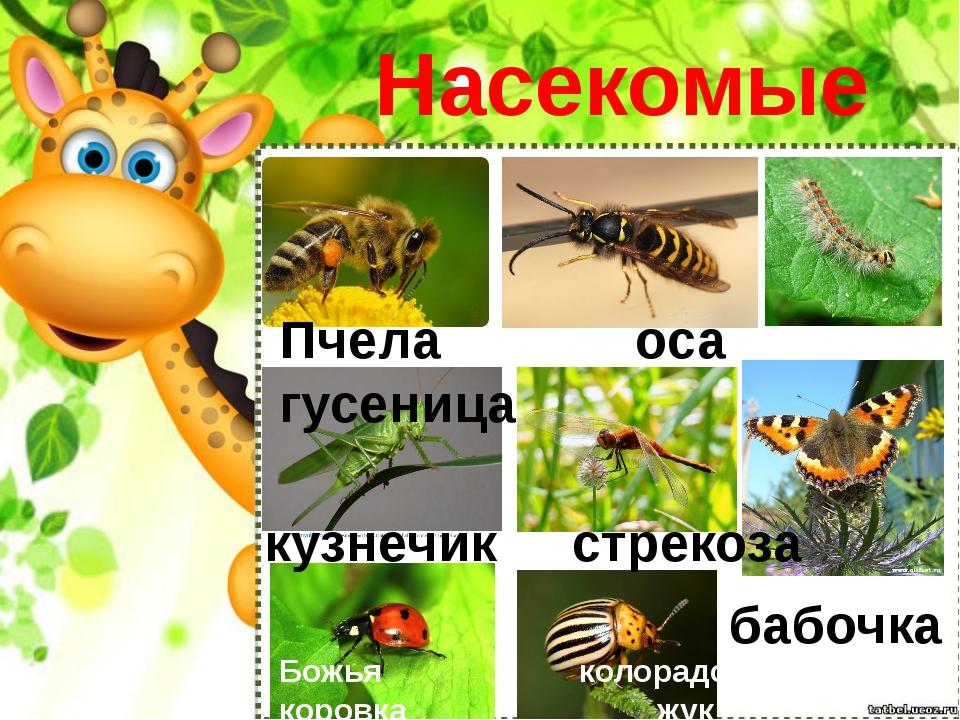 Насекомые Пчела оса гусеница кузнечик стрекоза Божья колорадский коровка жук...