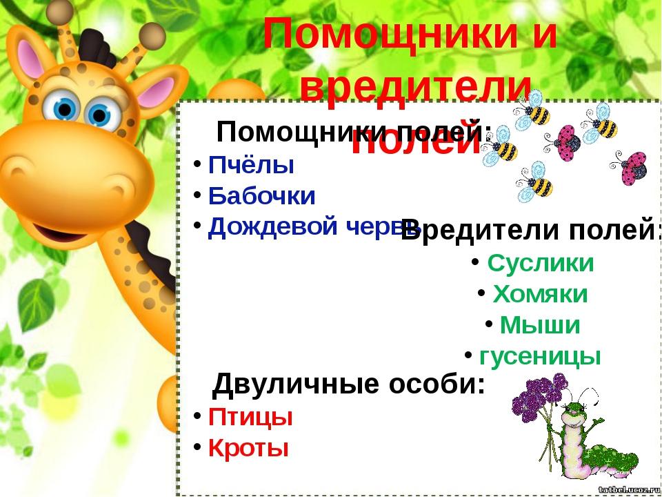 Помощники и вредители полей Помощники полей: Пчёлы Бабочки Дождевой червь Вре...
