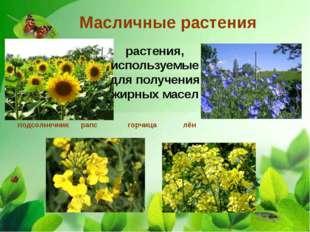 Масличные растения подсолнечник рапс горчица лён растения, используемые для