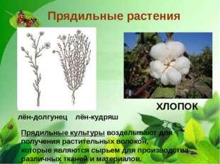 Прядильные растения лён-долгунец лён-кудряш ХЛОПОК Прядильные культуры возде