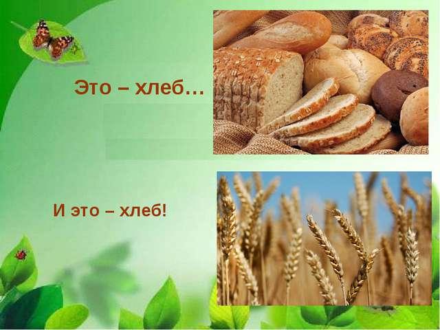 Это – хлеб… И это – хлеб!