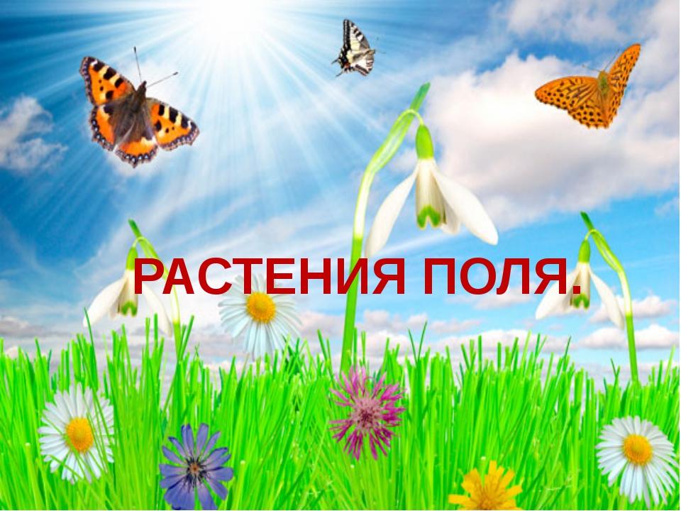 РАСТЕНИЯ ПОЛЯ.