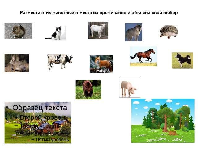 Размести этих животных в места их проживания и объясни свой выбор