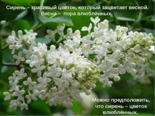 Сирень – красивый цветок, который зацветает весной. Весна – пора влюблённых.