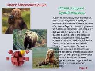 Класс Млекопитающие Отряд Хищные Бурый медведь Один из самых крупных и опасны