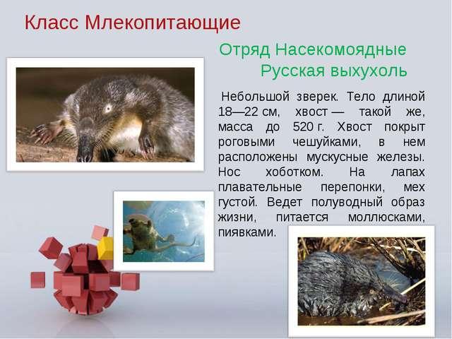 Класс Млекопитающие Небольшой зверек. Тело длиной 18—22см, хвост— такой же...
