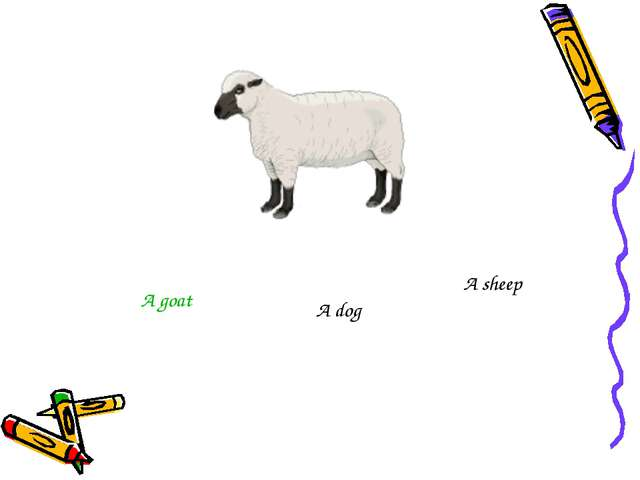 A goat A dog A sheep