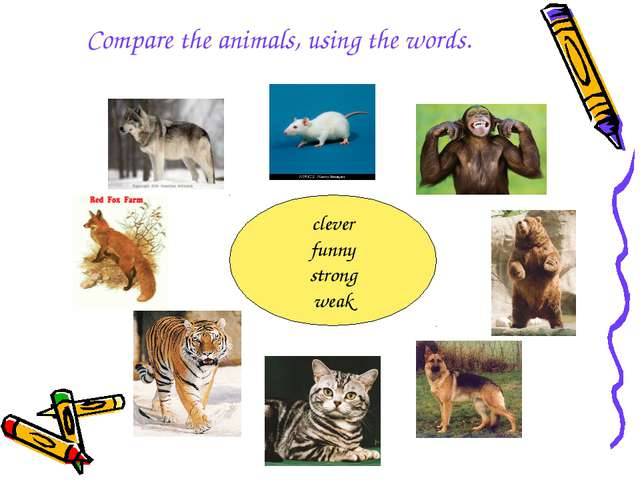 Compare the animals, using the words. clever funny strong weak