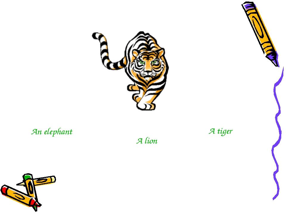 An elephant A lion A tiger