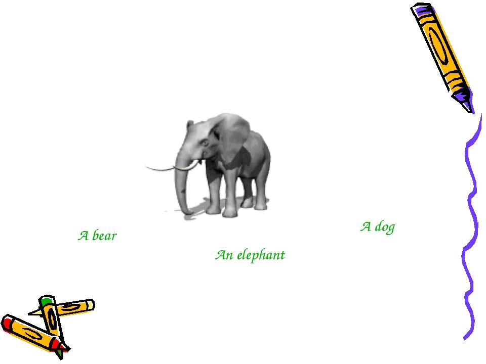 A bear An elephant A dog