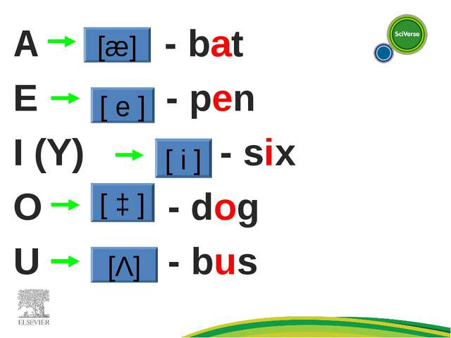 A - bat E - - pen I (Y) - six O - dog U - - bus [æ] [ e ] [ i ] [ ɔ ] [Λ]