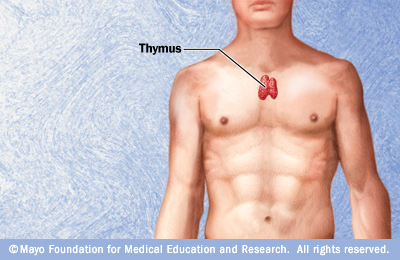 http://www.riversideonline.com/source/images/image_popup/r7_thymus.jpg