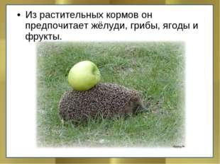 Из растительных кормов он предпочитает жёлуди, грибы, ягоды и фрукты.