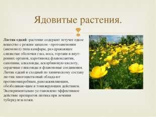 Лютик едкий -растение содержит летучее едкое вещество с резким запахом - прот