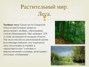 Хвойные леса.Среди лесов Самарской области наибольшую ценность представляют