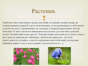 Наиболее многочисленную группу растений составляют редкие виды, не подвергающ