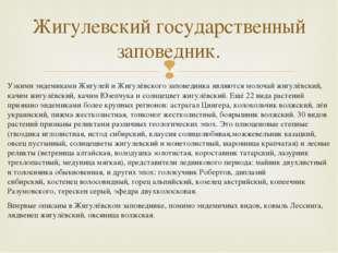 Узкими эндемиками Жигулей и Жигулёвского заповедника являются молочай жигулёв