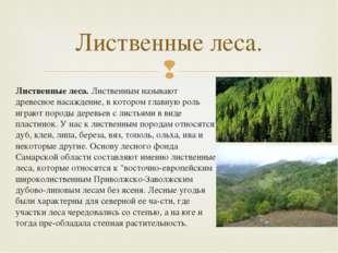 Лиственные леса.Лиственным называют древесное насаждение, в котором главную