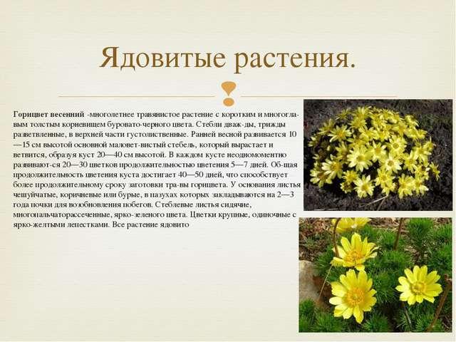 Горицвет весенний -многолетнее травянистое растение с коротким и многоглавым...