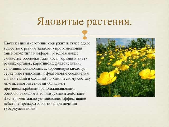 Лютик едкий -растение содержит летучее едкое вещество с резким запахом - прот...