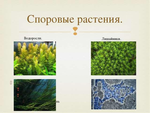 Споровые растения. Водоросли. Лишайники. 