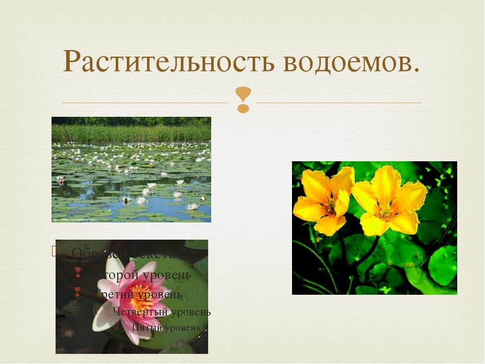 Растительность водоемов. 