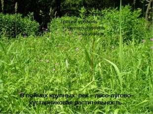 В поймах крупных рек – лесо-лугово-кустарниковая растительность.