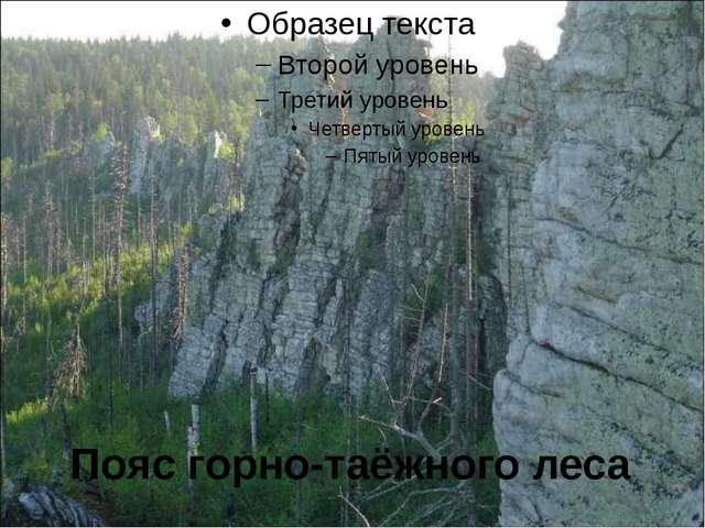 Пояс горно-таёжного леса